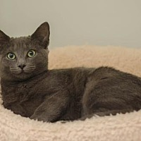 Adopt A Pet :: Jada - Ashland, MA