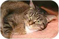 Domestic Shorthair Cat for adoption in Walker, Michigan - Sadie