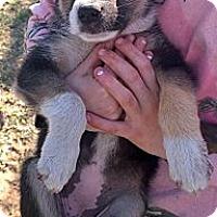 Adopt A Pet :: Peeps - Ranger, TX