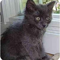 Adopt A Pet :: Hula - Portland, OR
