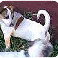 Adopt A Pet :: Spikey - dewey, AZ