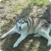 Adopt A Pet :: Krystal - Sterling Hgts, MI
