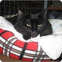 Adopt A Pet :: Nya - Mission, BC