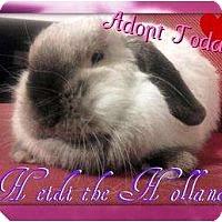 Adopt A Pet :: Heidi - Lakeland, FL