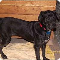 Adopt A Pet :: Zen - Scottsdale, AZ