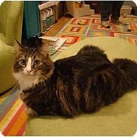Adopt A Pet :: Delko--PETSMART - Muncie, IN