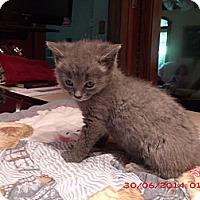 Adopt A Pet :: BONNIE - Acme, PA