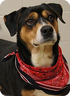 Hound (Unknown Type) Mix Dog for adoption in Groton, Massachusetts - Sparky