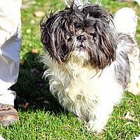 Adopt A Pet :: Bailey - Tinton Falls, NJ