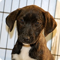 Adopt A Pet :: China - Philadelphia, PA