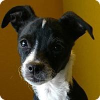 Adopt A Pet :: Tomato - San Diego, CA
