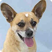 Adopt A Pet :: Bernard - Agoura, CA