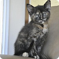 Adopt A Pet :: APPLE- 8 week old - New Smyrna Beach, FL