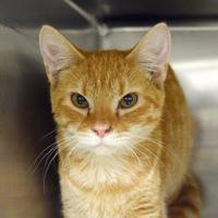 Adopt A Pet :: Justice 2 - Baltimore, MD