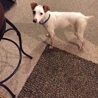 Adopt A Pet :: Duncan - Powell, OH