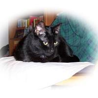 Adopt A Pet :: Princess - Palm Harbor, FL