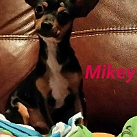 Adopt A Pet :: Mikey - Toronto, ON