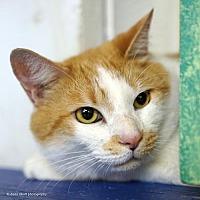 Adopt A Pet :: Abacus - Tucson, AZ