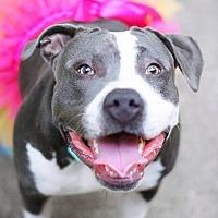 Adopt A Pet :: Lola - Blaine, MN