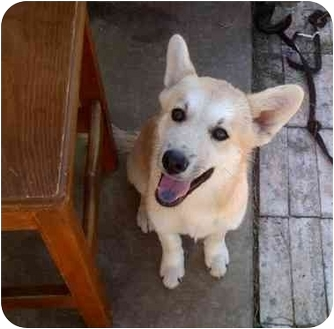 Shepherd (Unknown Type) Mix Puppy for adoption in Wylie, Texas - Sierra
