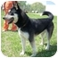 Photo 2 - Husky Mix Dog for adoption in Spring Valley, New York - Bear