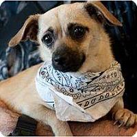 Adopt A Pet :: Gretel - Poway, CA