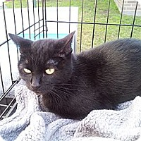 Adopt A Pet :: Thunder - Fort Worth, TX