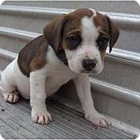 Adopt A Pet :: Muggins - Clayton, OH