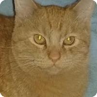 Adopt A Pet :: Butterscotch - Delmont, PA
