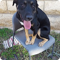 Adopt A Pet :: Wesson - Fort Riley, KS