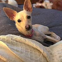 Adopt A Pet :: Jitterbug - Fresno, CA