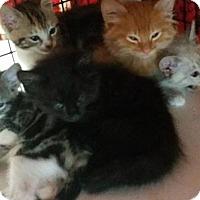 Adopt A Pet :: Yambo - Monterey, VA