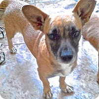 Adopt A Pet :: Melinda - San Diego, CA