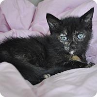 Adopt A Pet :: Babsy (Super friendly) - New Smyrna Beach, FL