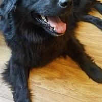 Adopt A Pet :: Estella - Doylestown, PA