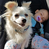 Adopt A Pet :: Minnie - Hainesville, IL