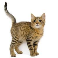 Adopt A Pet :: Howard - Adrian, MI