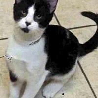 Adopt A Pet :: Sammy - Channahon, IL
