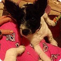 Adopt A Pet :: Lily - Owensboro, KY