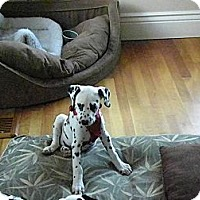 Adopt A Pet :: Whitney - Middletown, PA