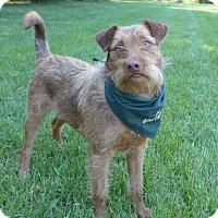 Adopt A Pet :: Gracie - Mocksville, NC