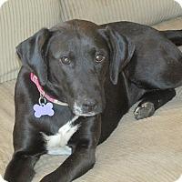Adopt A Pet :: Beauty - Franklin, VA