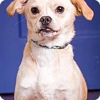 Adopt A Pet :: Otis - DRD graduate - Owensboro, KY