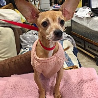 Adopt A Pet :: Greta - Santa Ana, CA