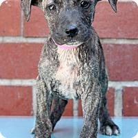Adopt A Pet :: Rosdale - Waldorf, MD