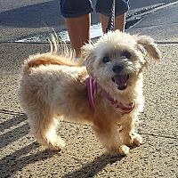 Adopt A Pet :: Nicky - Bronx, NY