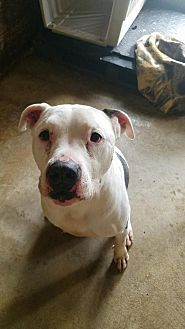 Terrier (Unknown Type, Medium) Mix Dog for adoption in Colfax, Illinois - Roscoe