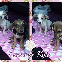 Hound (Unknown Type) Mix Puppy for adoption in Corinth, New York - Lucas & Kyle