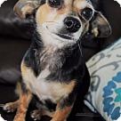 Adopt A Pet :: Bella 2