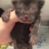 Adopt A Pet :: Slannen - Boone, NC